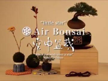 Air Bonsai: Levitating Magnetic Bonsai Trees
